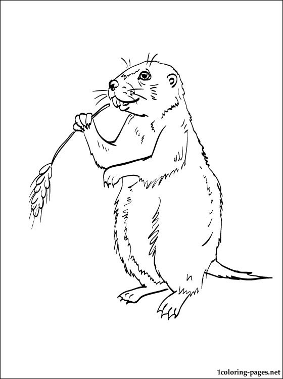 Prairie Dog coloring #15, Download drawings