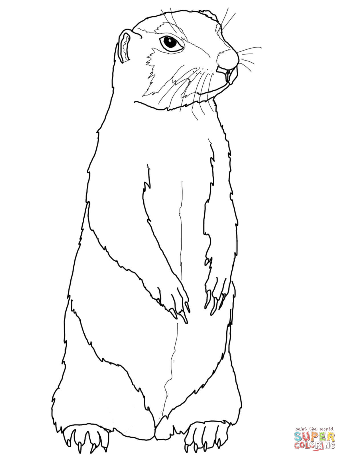 Prairie Dog coloring #3, Download drawings