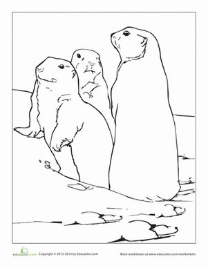 Prairie Dog coloring #20, Download drawings