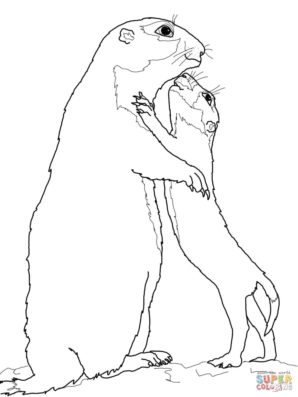 Prairie Dog coloring #7, Download drawings