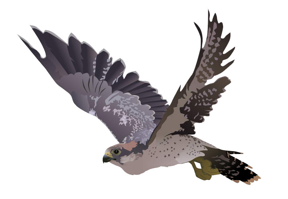 Prairie Falcon clipart #6, Download drawings