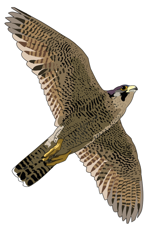 Prairie Falcon clipart #8, Download drawings