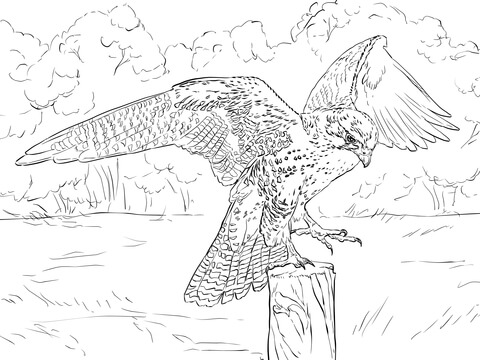 Prairie Falcon coloring #5, Download drawings