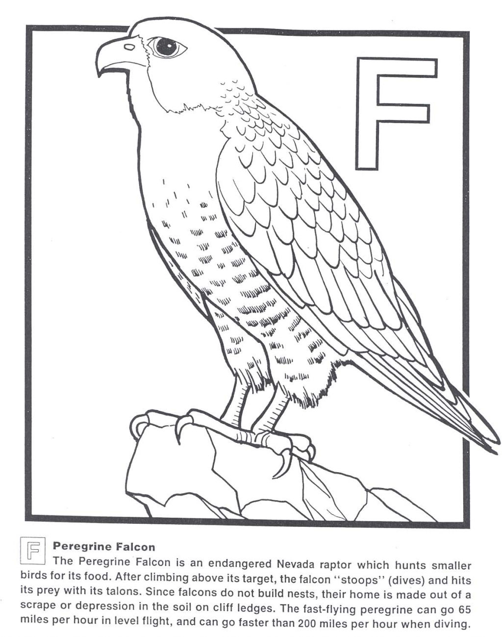Prairie Falcon coloring #11, Download drawings