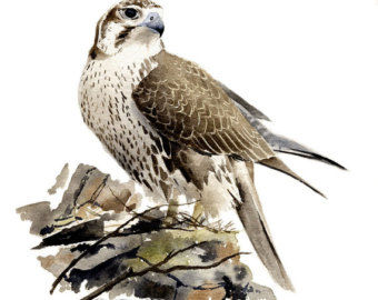 Prairie Falcon svg #17, Download drawings