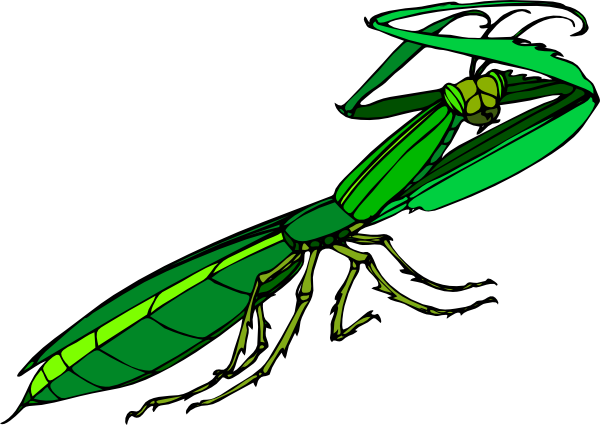 Praying Mantis clipart #2, Download drawings