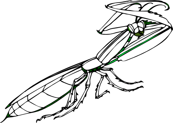 Praying Mantis coloring #11, Download drawings