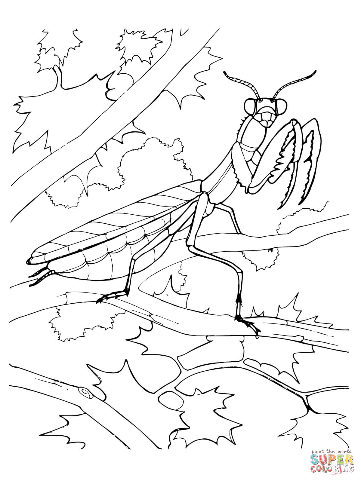 Praying Mantis coloring #17, Download drawings