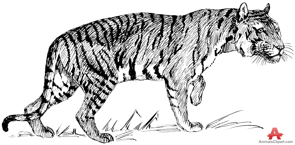 Predator (Animal) clipart #14, Download drawings