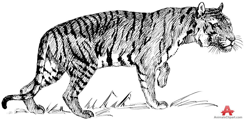 Predator (Animal) clipart #7, Download drawings