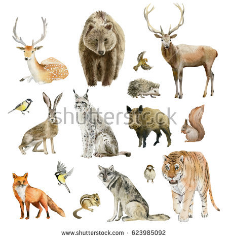 Predator (Animal) clipart #16, Download drawings