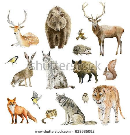 Predator (Animal) clipart #5, Download drawings