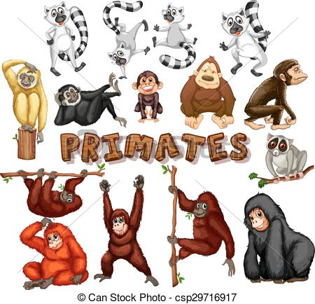 Primate clipart #14, Download drawings