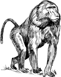 Primate clipart #9, Download drawings