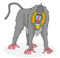 Primate clipart #17, Download drawings