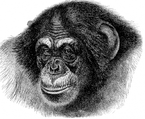 Primate clipart #8, Download drawings