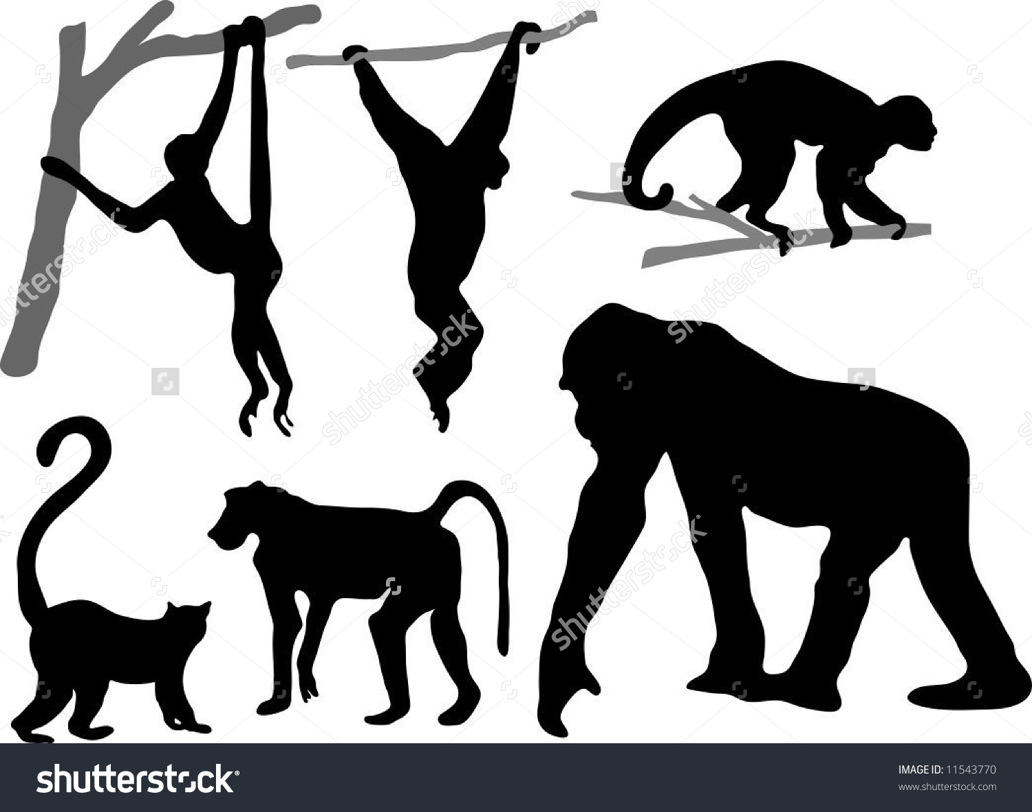 Primate clipart #4, Download drawings