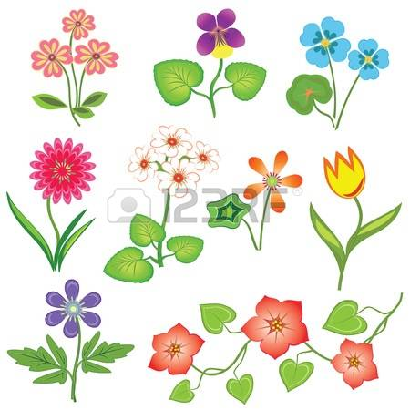 Primula clipart #9, Download drawings