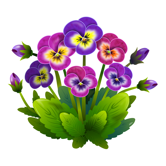 Primula clipart #1, Download drawings
