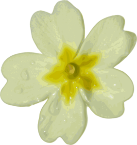 Primula clipart #8, Download drawings