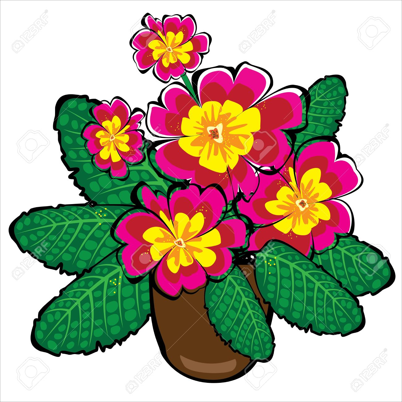 Primula clipart #18, Download drawings