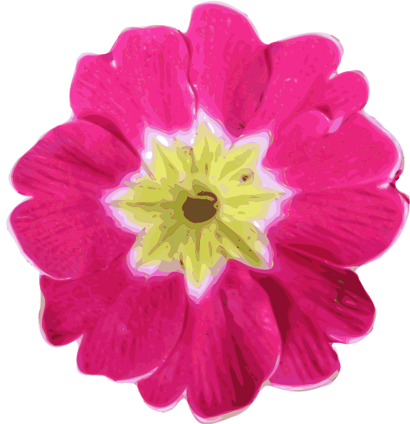 Primula clipart #12, Download drawings