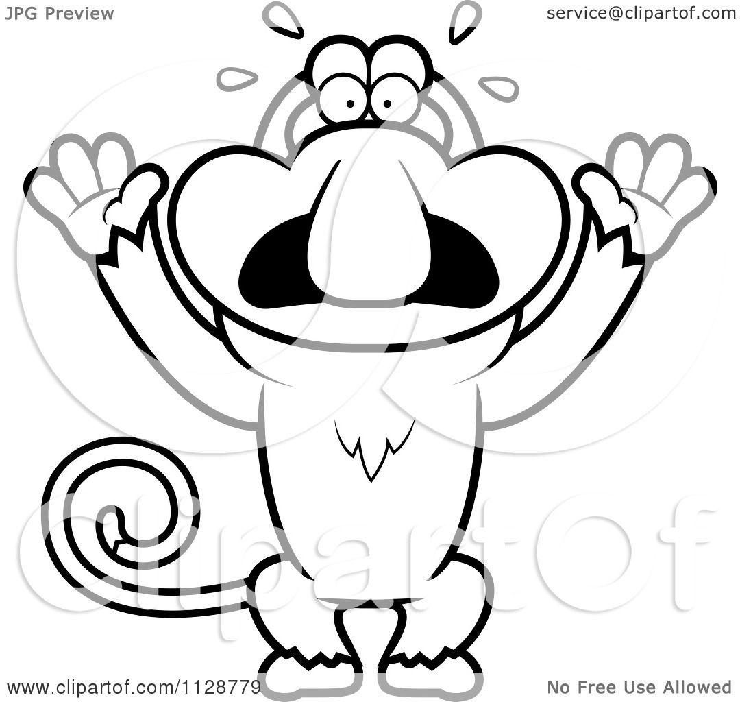 Proboscis Monkey clipart #7, Download drawings