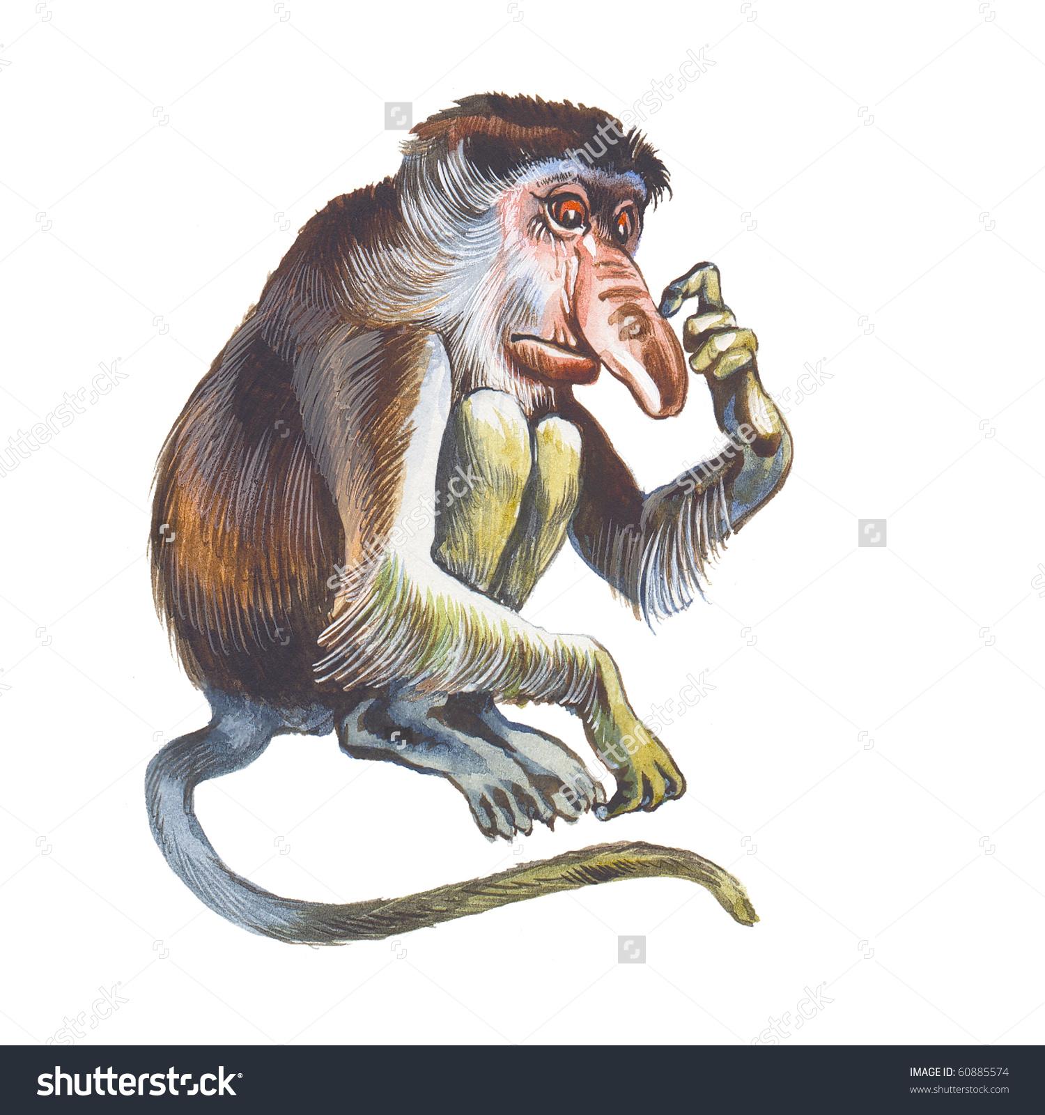 Proboscis Monkey clipart #1, Download drawings