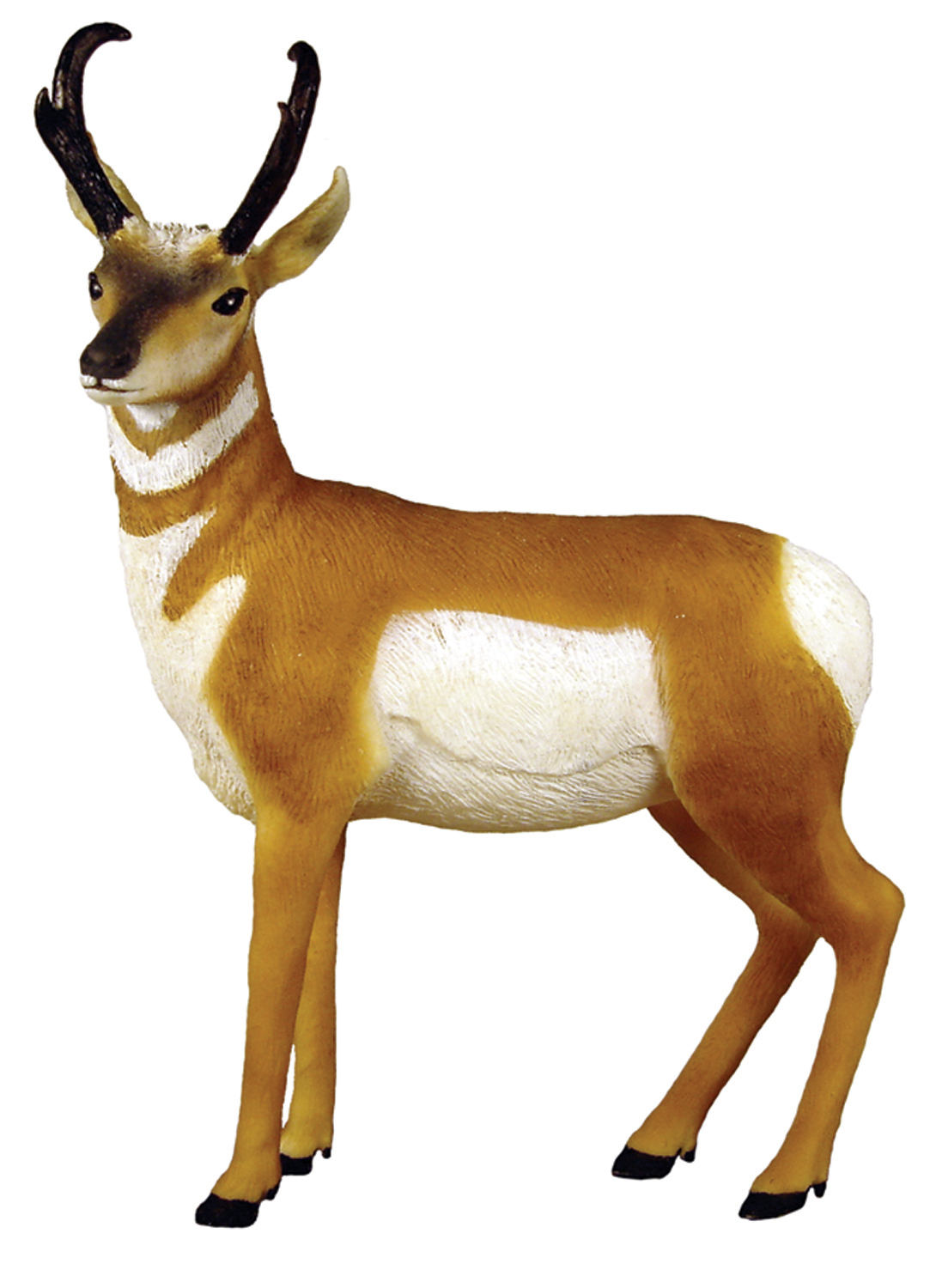 Pronghorn Antelope clipart #4, Download drawings