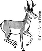 Pronghorn Antelope clipart #10, Download drawings