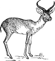 Pronghorn Antelope clipart #19, Download drawings