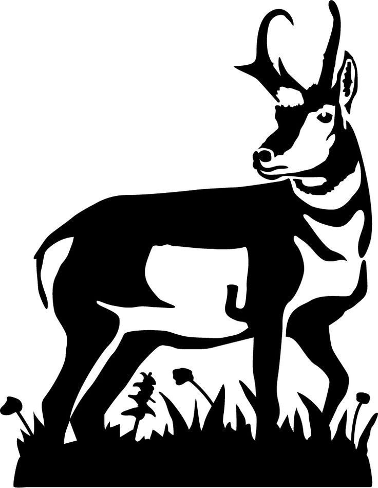 Pronghorn Antelope clipart #5, Download drawings