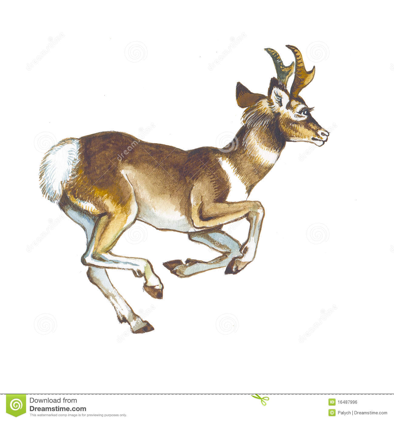 Pronghorn Antelope clipart #17, Download drawings