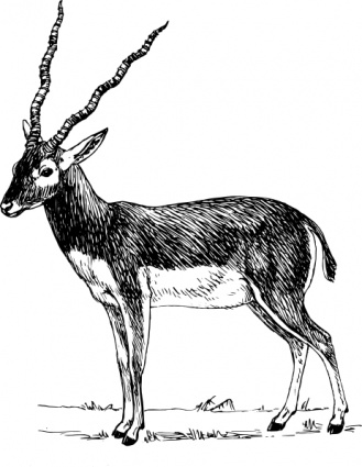 Pronghorn Antelope clipart #16, Download drawings