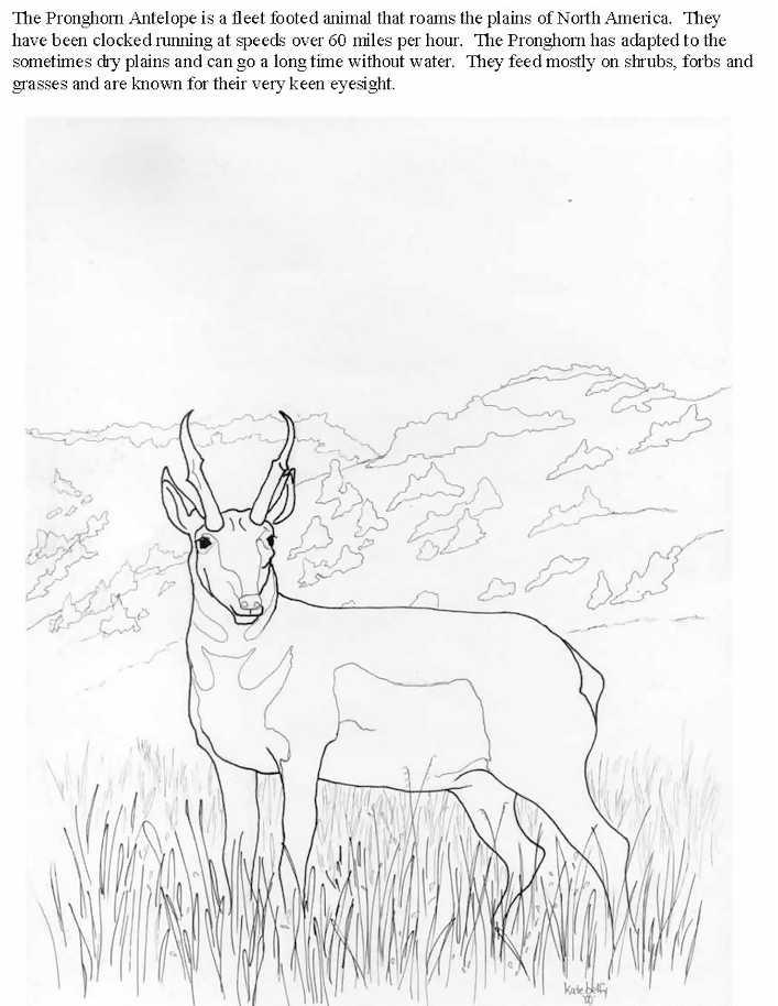 Pronghorn coloring Download Pronghorn
