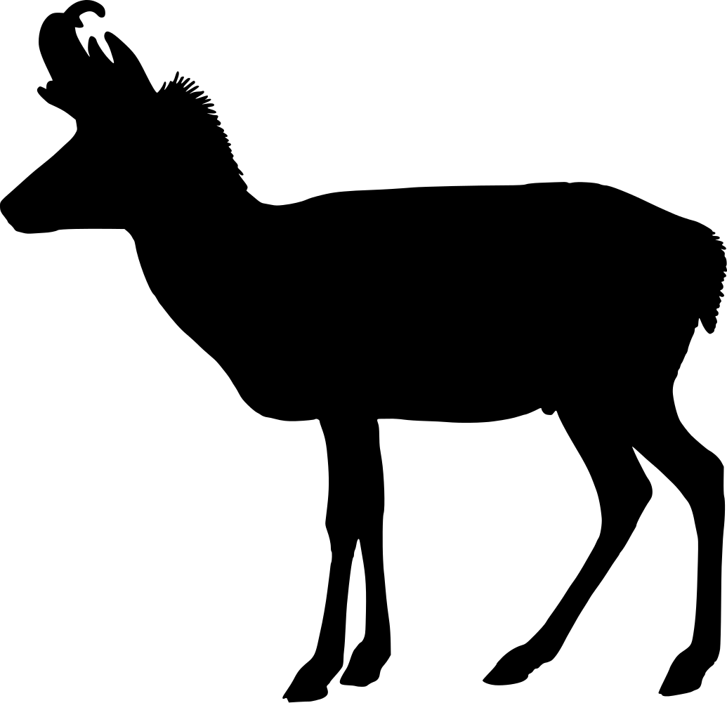 Pronghorn clipart #14, Download drawings