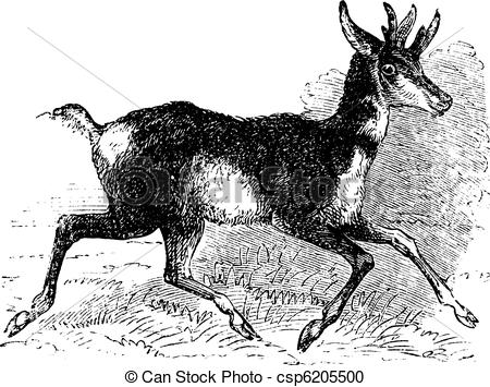 Pronghorn clipart #8, Download drawings