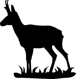 Pronghorn clipart #6, Download drawings