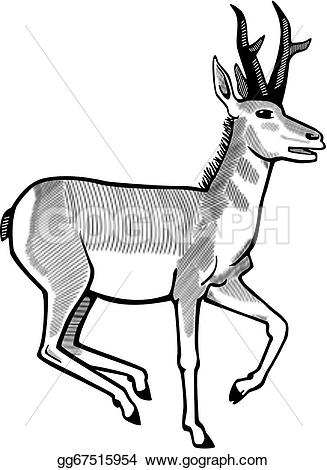 Pronghorns clipart #8, Download drawings
