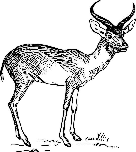 Pronghorns clipart #18, Download drawings