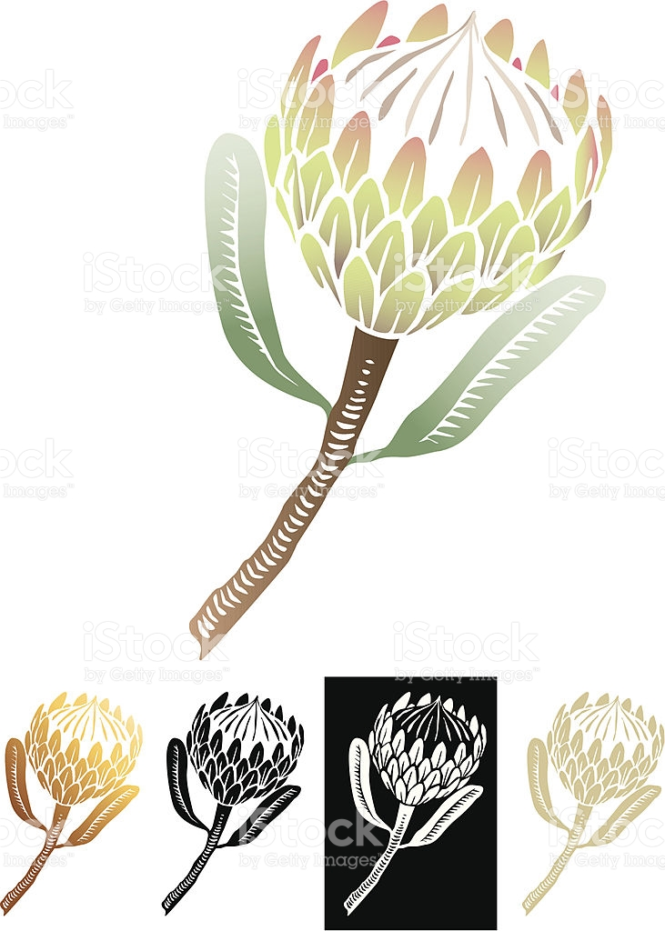Protea clipart #10, Download drawings