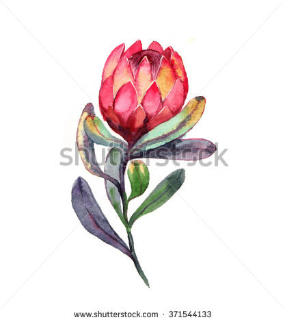 Protea clipart #6, Download drawings