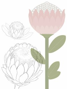 Protea clipart #5, Download drawings