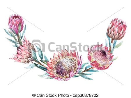 Protea clipart #15, Download drawings