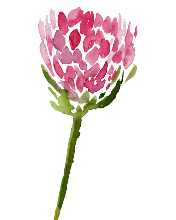 Protea clipart #13, Download drawings