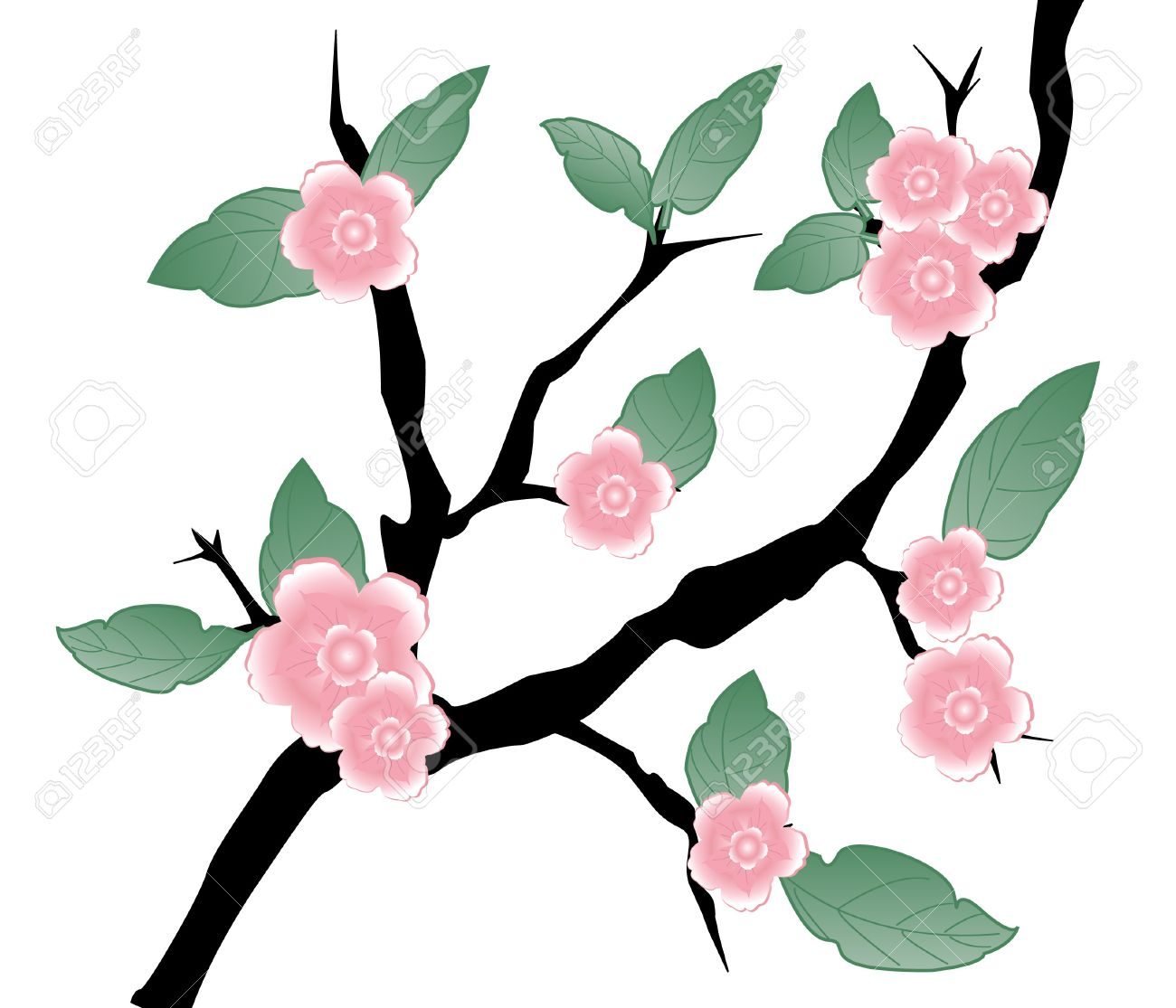 Prunus Blossom clipart #5, Download drawings
