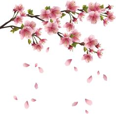 Prunus Blossom clipart #7, Download drawings