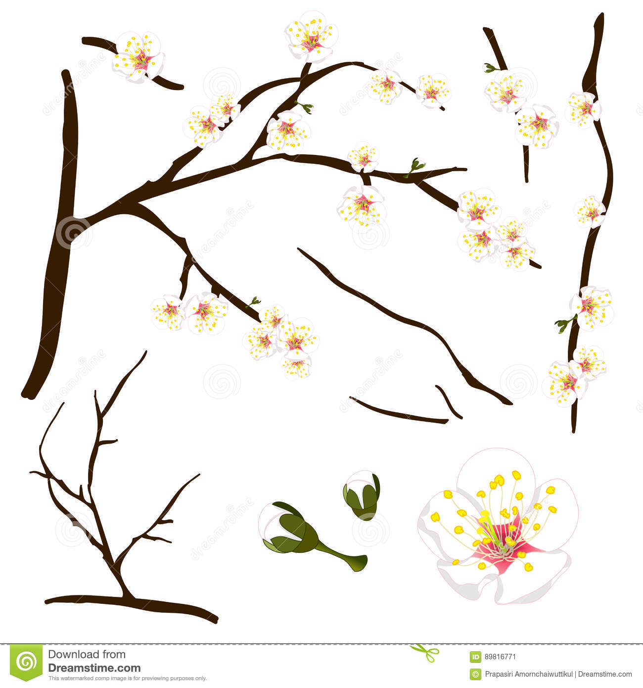 Prunus Blossom clipart #3, Download drawings