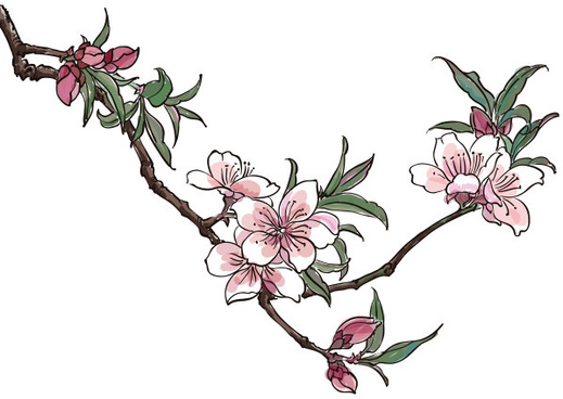 Prunus Blossom clipart #6, Download drawings