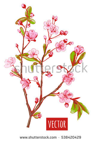 Prunus Blossom clipart #15, Download drawings